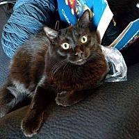 Adopt A Pet :: King - Redding, CA