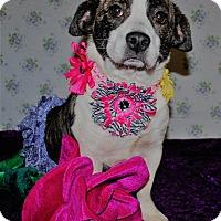 Adopt A Pet :: Eeyore - Waupaca, WI