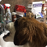 Adopt A Pet :: Stetson - Denver, CO