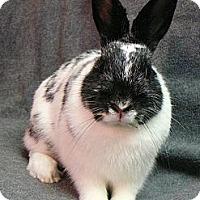 Adopt A Pet :: Reno - Newport, DE