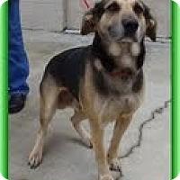 Adopt A Pet :: Andes (URGENT! $150 off fee)) - Brattleboro, VT