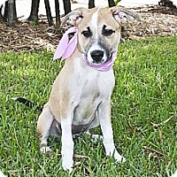 Adopt A Pet :: Lady - North Palm Beach, FL