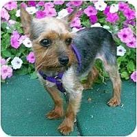 Adopt A Pet :: Suzie - Freemont, CA