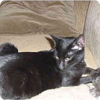 Adopt A Pet :: KITKAT (DS) - Little Falls, NJ
