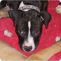 Adopt A Pet :: Jetta - Reisterstown, MD