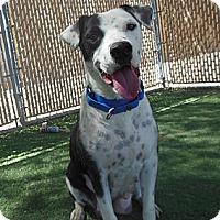 Adopt A Pet :: Wendy - Phoenix, AZ