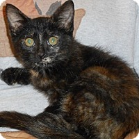 Adopt A Pet :: Wowza - North Highlands, CA