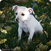 Adopt A Pet :: George - Broomfield, CO