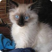 Adopt A Pet :: Markiz - Davis, CA