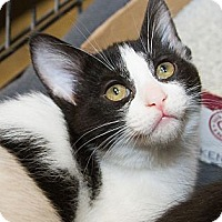 Adopt A Pet :: Minnie - Irvine, CA