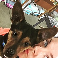 Adopt A Pet :: Skully - Pitt Meadows, BC