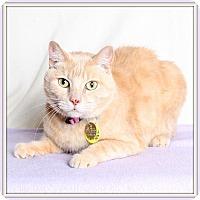 Adopt A Pet :: Blossom - Glendale, AZ