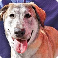 Adopt A Pet :: Kiki - Inglewood, CA