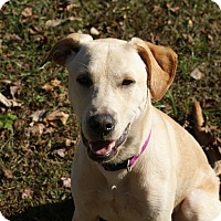 Adopt A Pet :: Mali (Malley) - Bowie, MD