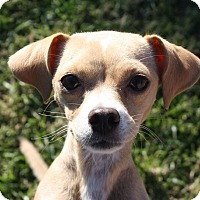 Adopt A Pet :: Cleo - Henderson, NV