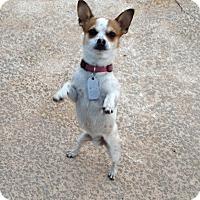 Adopt A Pet :: CHARLIE - Gustine, CA