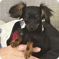 Adopt A Pet :: Pogo - Costa Mesa, CA
