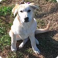 Adopt A Pet :: Shelby - Waller, TX