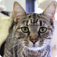 Adopt A Pet :: Mary Pawpins - Martinsville, IN