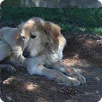 Adopt A Pet :: Hannah - Irwin, PA
