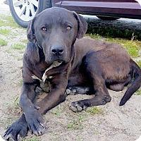 Adopt A Pet :: Clarkson - Lemoore, CA