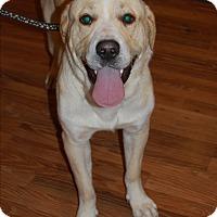 Adopt A Pet :: Gabe - Sawyer, ND