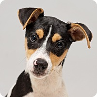 Adopt A Pet :: Thatcher - Westfield, NY