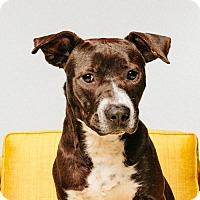 Adopt A Pet :: Scooter - ROSENBERG, TX