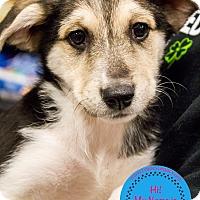 Adopt A Pet :: Hamm - Staten Island, NY