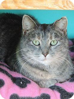 Domestic Shorthair Cat for adoption in Brookings, South Dakota - Frida