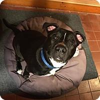 Adopt A Pet :: King - Middletown, RI