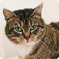 Adopt A Pet :: Mabel - Brimfield, MA