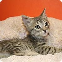 Adopt A Pet :: ALEXANDRA - SILVER SPRING, MD