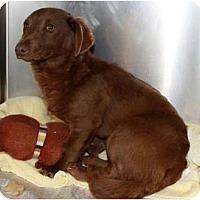 Adopt A Pet :: Blake - Alexandria, VA