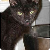 Adopt A Pet :: Mr. Whiskers - Davis, CA