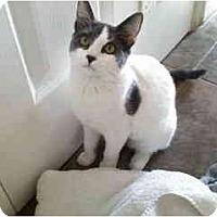Adopt A Pet :: Tuesday - Little Falls, NJ