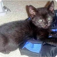 Adopt A Pet :: Achilles - Davis, CA