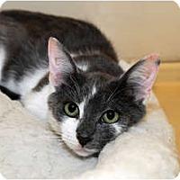 Adopt A Pet :: Ralphie - Farmingdale, NY