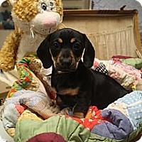 Adopt A Pet :: JC - PORTLAND, ME