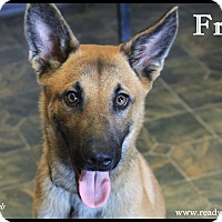 Adopt A Pet :: Fritz - Rockwall, TX