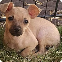 Adopt A Pet :: Flik - a bug's life litter - Phoenix, AZ