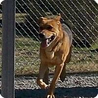 Adopt A Pet :: Motega - Lewisburg, TN