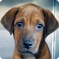 Adopt A Pet :: St Nicholas - Germantown, MD
