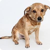 Adopt A Pet :: Zeke (Foster) - Baton Rouge, LA