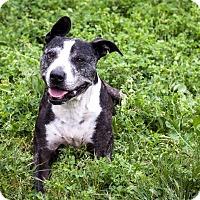 Adopt A Pet :: Lexi - St Helena, CA