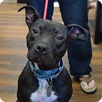 Adopt A Pet :: Cornelius - Dayton, OH