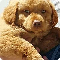 Adopt A Pet :: I'M ADOPTED Frankie LaFave - Oswego, IL