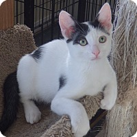 Adopt A Pet :: Cobalt - Quail Valley, CA