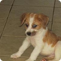 Adopt A Pet :: Nike - Rocky Mount, NC