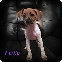 Adopt A Pet :: Emily - Denver, NC